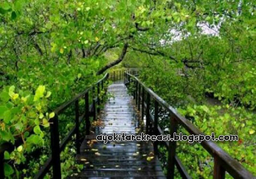 Wisata Hutan Mangrove Jakarta