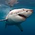 Δες εδώ σε ποιες παραλίες θα σας επιτεθούν καρχαρίες;