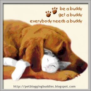 Everybuddy needs a buddy