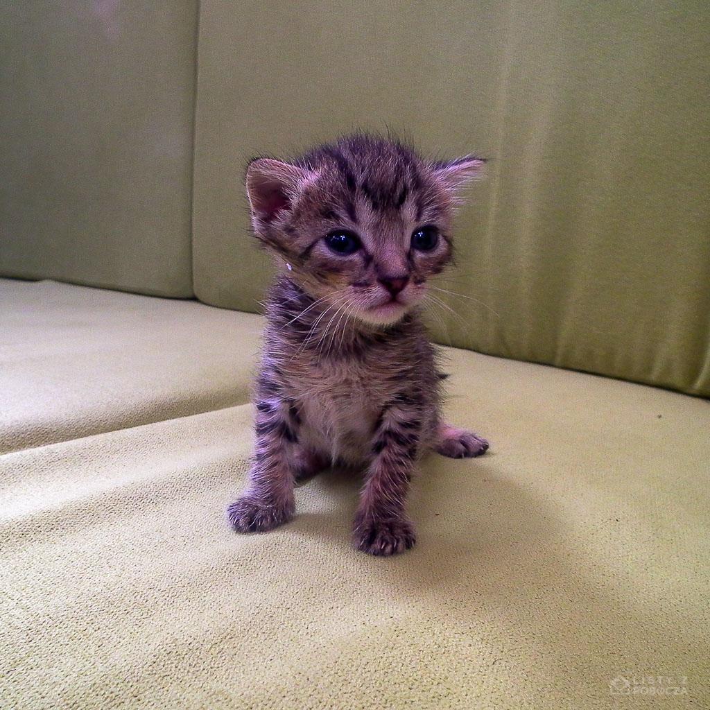 Kot Piada na łodzi Antouka na Wyspach Zielonego Przylądka
