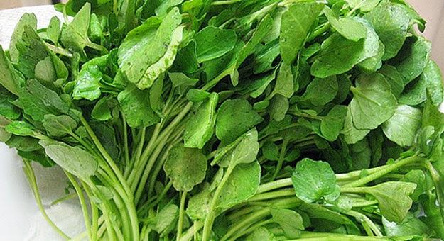 أعشاب فعالة لعلاج خراج الرئة