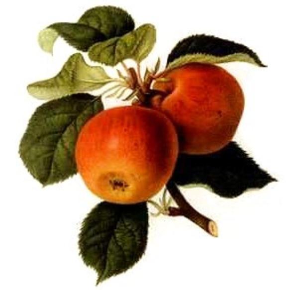 Chez marielle et gilda on aime les ig bas vinaigre de cidre de pommes - Faire son vinaigre de cidre ...