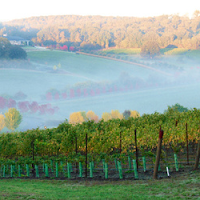 Left Coasts' Latitude 45° Vineyard