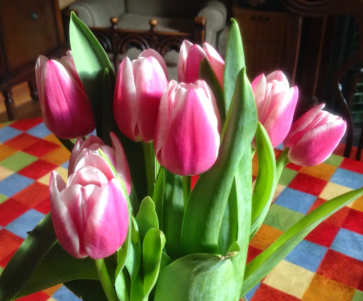 Other People's Baking and Gratuitous Tulips