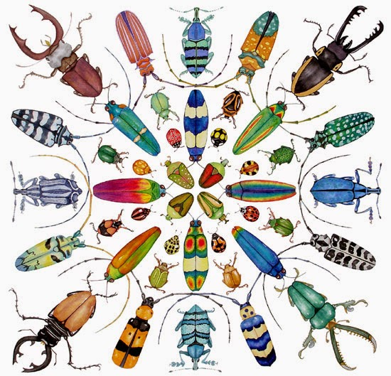 Beetle - colorful