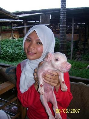 KESAKSIAN ROHANI: Menurut Alquran, Babi itu Halal
