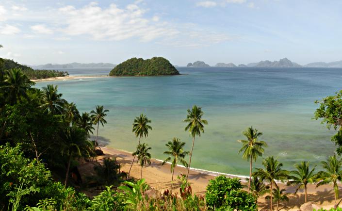 Coconuts in El Nido Palawan