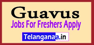 Guavus Recruitment 2017 Jobs For Freshers Apply