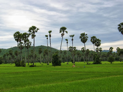 palmier-sucre-kampong-chnang-cambodge