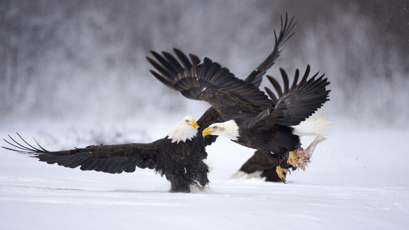 | Eagle | Eagle Hd Wallpapers | Eagle Pictures | Eagle ...