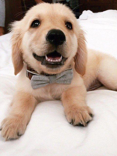 Top 5 Most Affectionate Dog Breeds