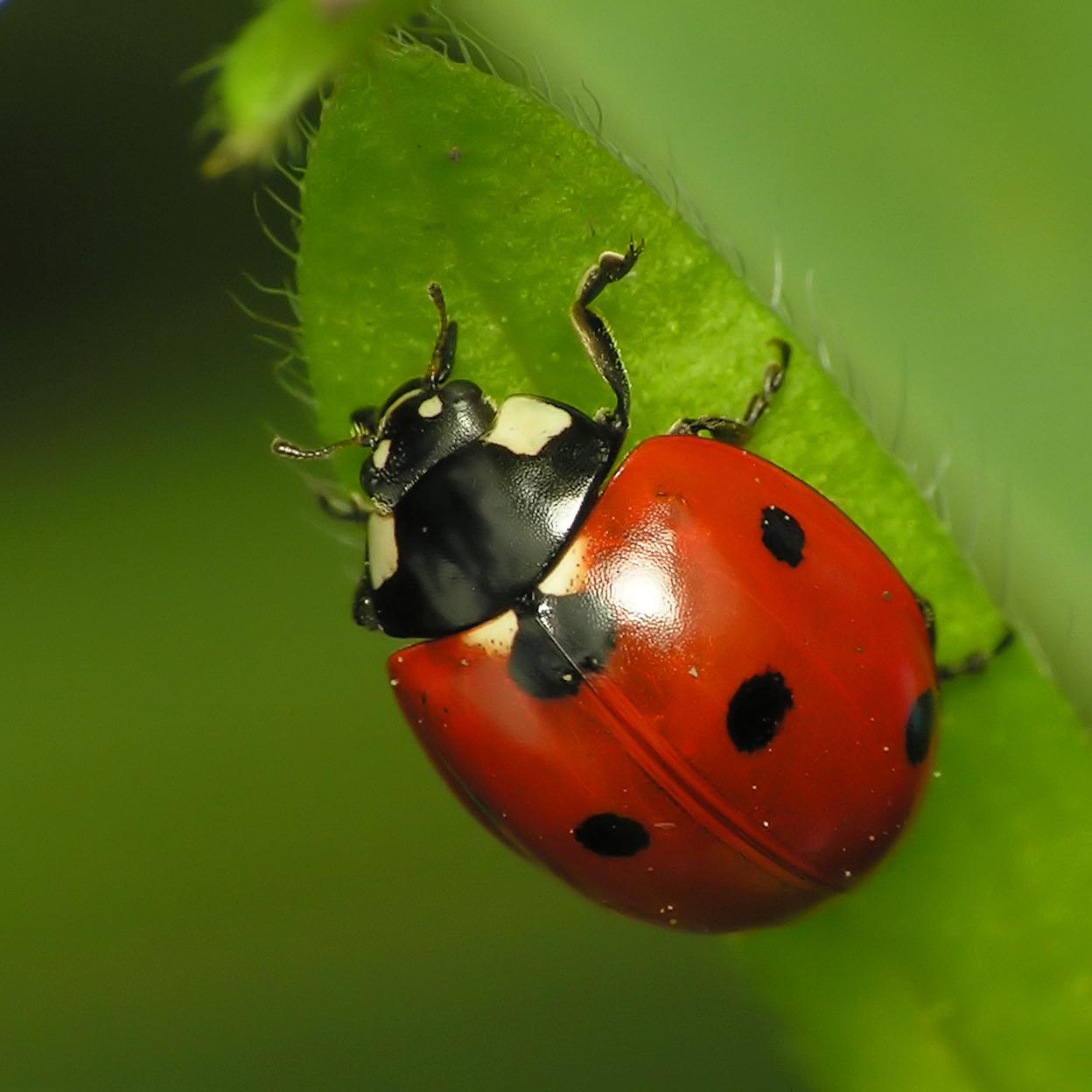 Beautiful Wallpapers: Most Beautiful Ladybug Photography ...