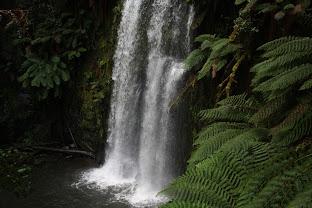Beauchamp Falls, Beech Forest, Otway waterfalls