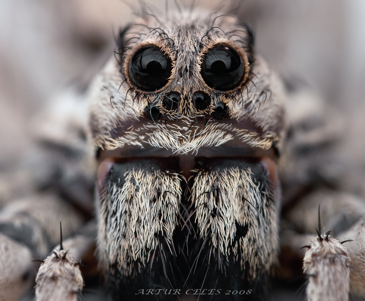 Amazing Tarantula Spider Giant Tarantula Facts Photos