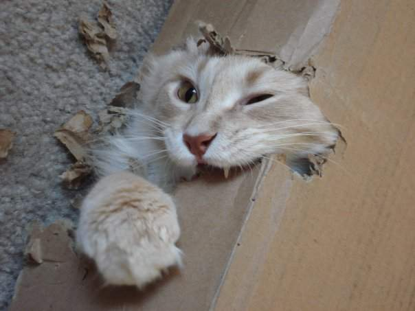Funny cats - part 205, best cat pictures, cat photos of the week, cute cat pics