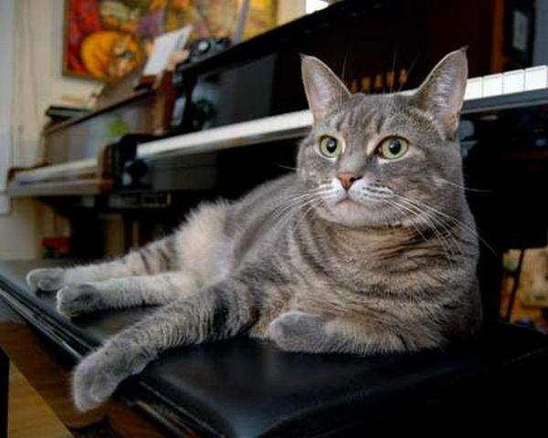 Cat sitting on piano bench