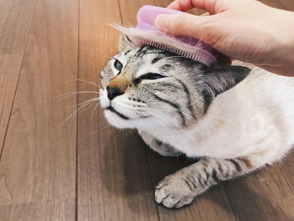 ラバーブラシで猫の頭皮をマッサージ