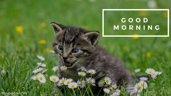 good morning photos flowers with cat