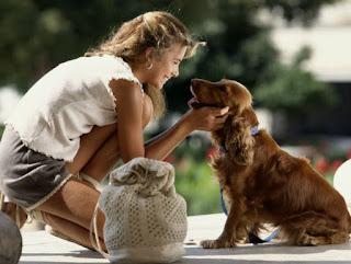 No siempre es cierto que un perro viejo no puede aprender nuevos trucos. Ya sea que su mascota sea vieja o joven, cualquier perro puede beneficiarse al participar en un programa de entrenamiento de perros en el hogar