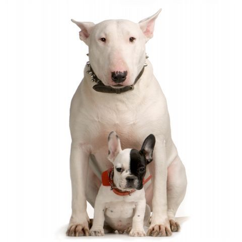 Dog With Big Body Small Head