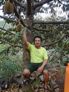 Foto Durian Menoreh Kuning Tanam di depan Rumah dgn Pak RObi