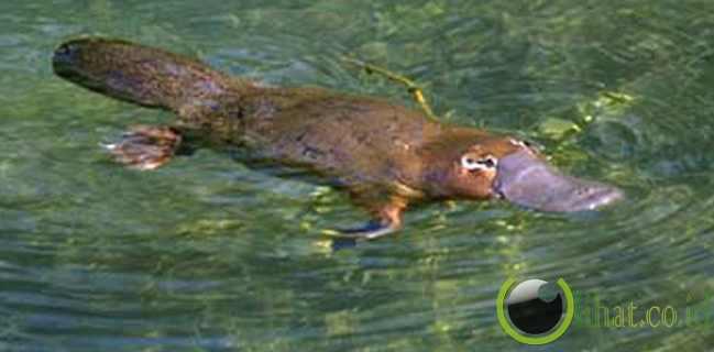 Hewan Gabungan Burung, Reptil, dan Mamalia