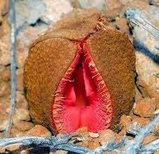 Plantas exóticas com formato sexuais