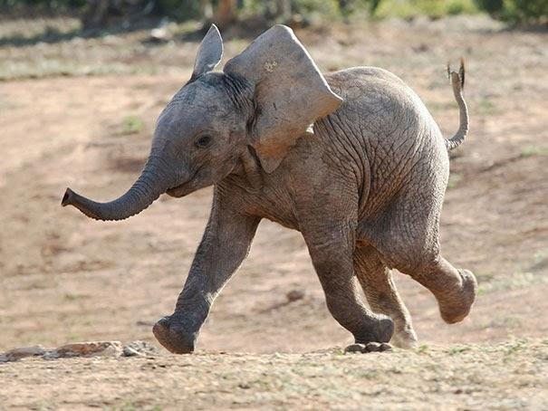happy animals photos2