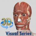 تحميل Visual Muscles 3D