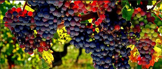 Ini Negara Pertama Yang Akan Menanam Anggur Di Mars