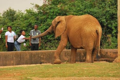 Top 5 Nigerian Destinations For The Wildlife Lovers
