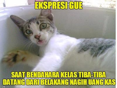 Meme Lucu Kucing Galau  Blog Meme Bergambar