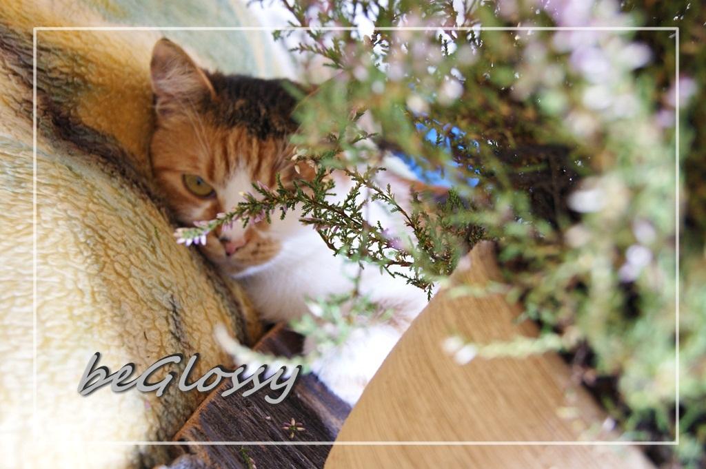 beGlossy x 2 | Sierpień 2016 - Na Szpilkach | Wrzesień 2016 - Slow Life