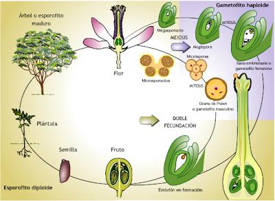 Propagacion sexual y asexual de las plantas