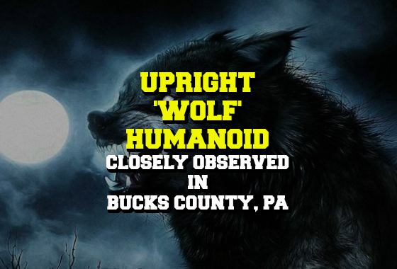 Upright 'Wolf' Humanoid Closely Observed in Bucks County, PA