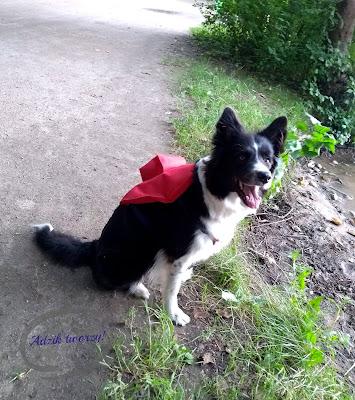 szycie dla psa pomysły