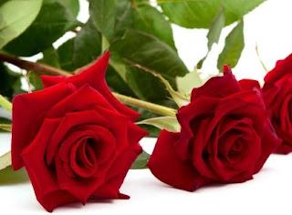 11 Khasiat Bunga Mawar Untuk Kesehatan Dan Kecantikan