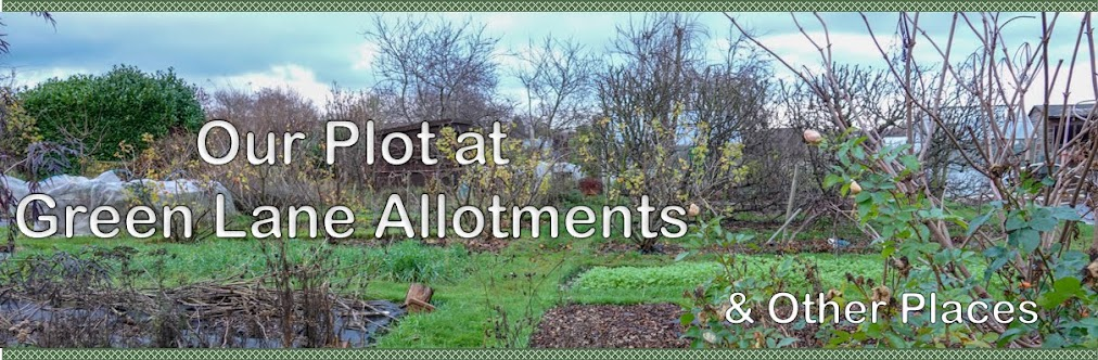 Our Plot at Green Lane Allotments