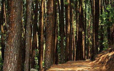 Ragam Hias Bahan Kayu Dan Jenis Pohon Bahan Pembuatan Ragam Hias Kayu