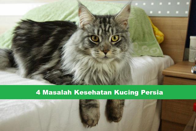 mengatasi masalah kesehatan kucing persia