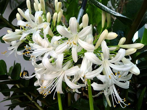 Romantic flowers white flowers you can suggest sincerity and appreciation when offering a white flower bouquet they express a truthful clean and open heart and bring brightness and mightylinksfo