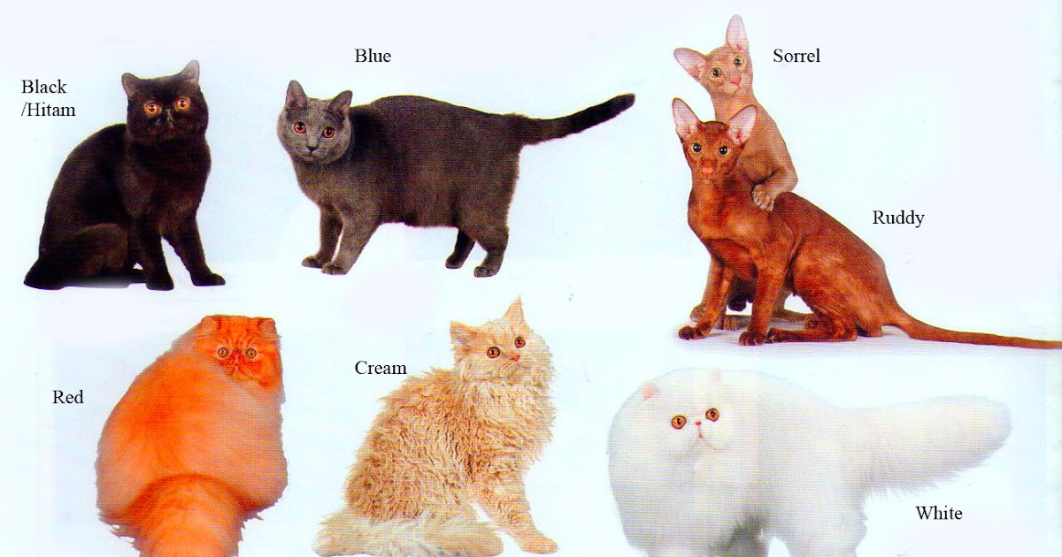 Nama Jenis Kucing Abu Abu 81021 Nama Untuk Kucing Comel Lucu Dan Unik