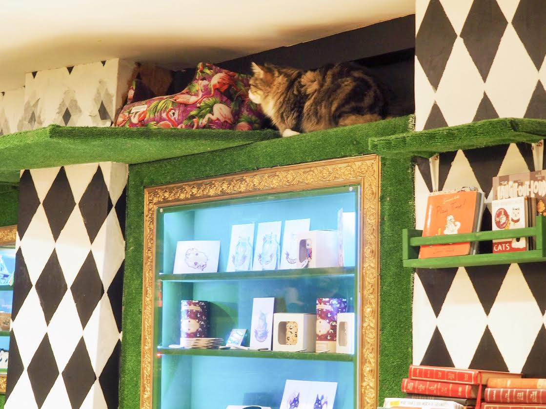 Lady Dinah's Cat Emporium review london