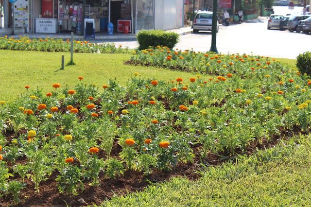 Πρέβεζα: επανατοποθέτηση φυτών, λουλουδιών σε κόμβο Φόρου-παραλία, χωρίς κόστος!