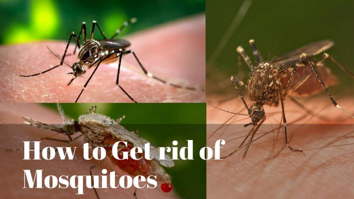 mosquito control how to get rid of mosquitoes orkincom - 708×398