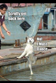 Dog Dancing on Water