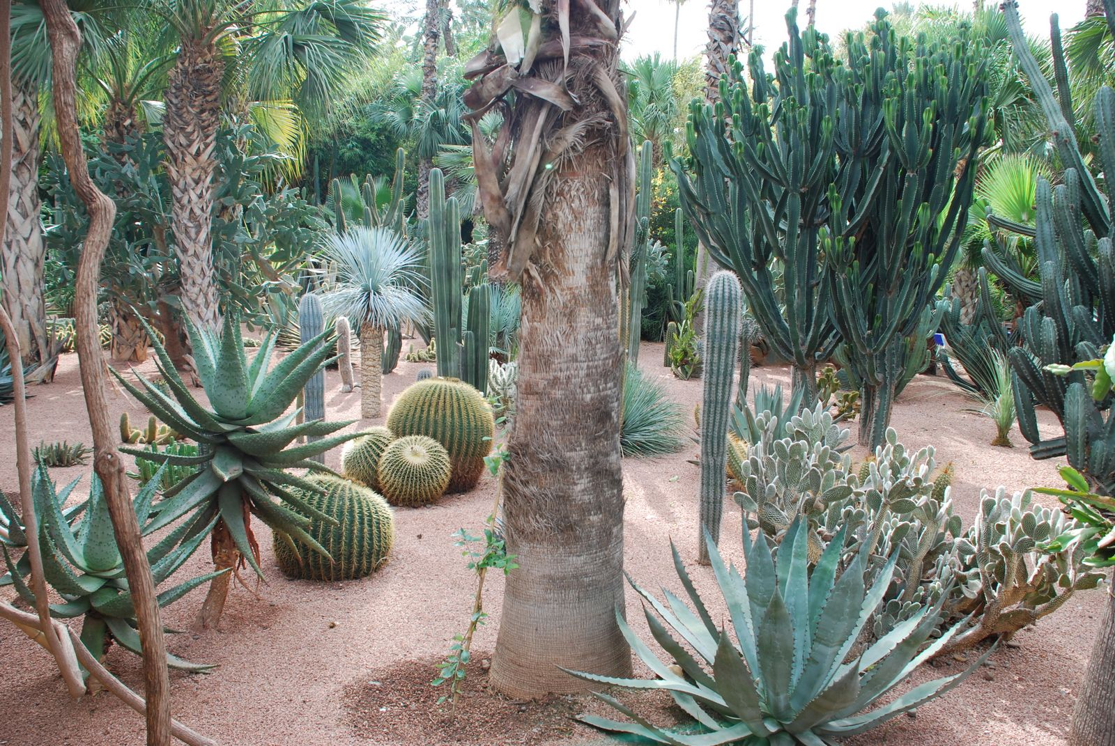 specimen cacti and succulents at Marjorelle gardens