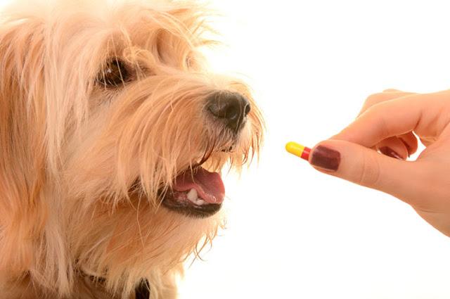 Dog Dewormer Home Remedy