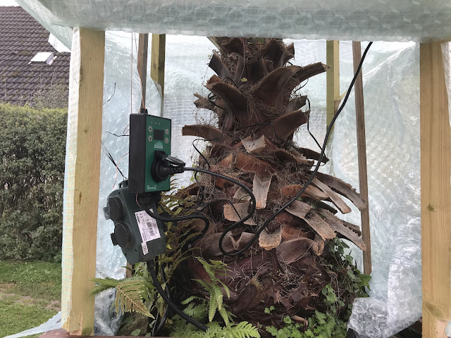 Stromanschluß und Thermostat für die Palmenheizung