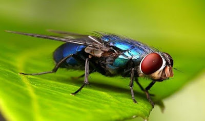 Fly is Animal That Start With F